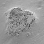 Углеродистый абсорбирующий порошок